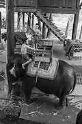 Cambodia, Angkor, Siem Reap, elephants