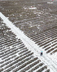 © Licensed to London News Pictures. 18/03/2018. Banstead, UK. Visitors to Mayfield Lavender brave the weather as light flurries of snow and freezing temperatures continue. Amber weather warnings remain in place for parts of the UK for a second day. Drone flown with permission of Mayfield Lavender. Photo credit: Peter Macdiarmid/LNP