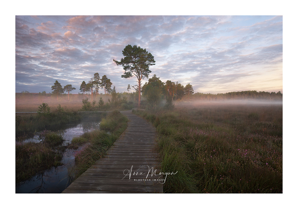 A stunning pink sunrise over Thursley Common in Southern England