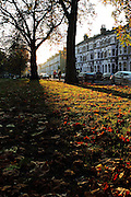 Sun shines on the fallen autumn leaves in Parsons Green, south-west London