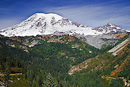 Autunm colors paint the slopes of Stevens Canyon with Mount Rainier and Little Tahoma towering above.  The road connects Paradise with Ohanapecosh by following high on the north slope of the canyon.