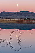 Reeds and Rising Moon after Sunset, Ash Meadows National Wildlife Refuge, Nye County, Nevada