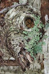 Bark Detail, Castine, Maine, US