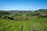 SAN GIMIGNANO, ITALY - CIRCA MAY 2015:  Vineyards over the hills near San Gimignano in Tuscany