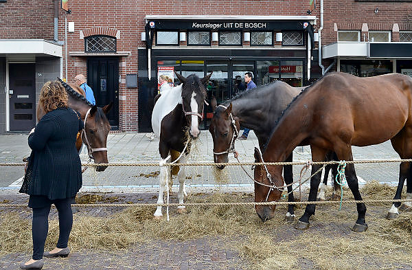 Nederland, Elst, 1-9-2014Paardenmarkt, ponymarkt in Elst, Elster paardenmarkt. Deze is onlangs uitgeroepen tot werelderfgoed, toegevoegd aan de werelderfgoedlijst. Handelaren van paarden. Veel van de verhandelde dieren gaan naar slachthuizen o.a. in Italie en Belgie. Paardenvlees. Transport van dieren in Europa.Foto: Flip Franssen/Hollandse Hoogte