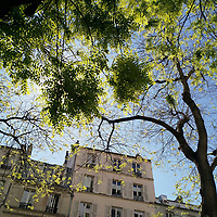 La lumière était presque aveuglante.<br /> Mais elle était si agréable ! Surtout en ce mois d'avril, en plein confinement.<br /> Je n'avais pas le droit de sortir pour faire plus que quelques courtes balades<br /> mais j'en profitais pleinement grâce à cette douce chaleur printanière. Et,<br /> armé de mon téléphone, je photographiais les jeux de lumière dans les feuilles<br /> des arbres. Un printemps un peu curieux mais avec des moments magiques.<br /> <br /> The light was almost blinding.<br /> But it felt so good! Especially in April, when the country was under lockdown.<br /> I was only allowed a few short walks outside but I was making the most of them<br /> thanks to this lovely Spring warmth. And, phone in hand, I was photographing<br /> the play of light in the tree leaves. A very strange Spring but it had its<br /> moments of magic.