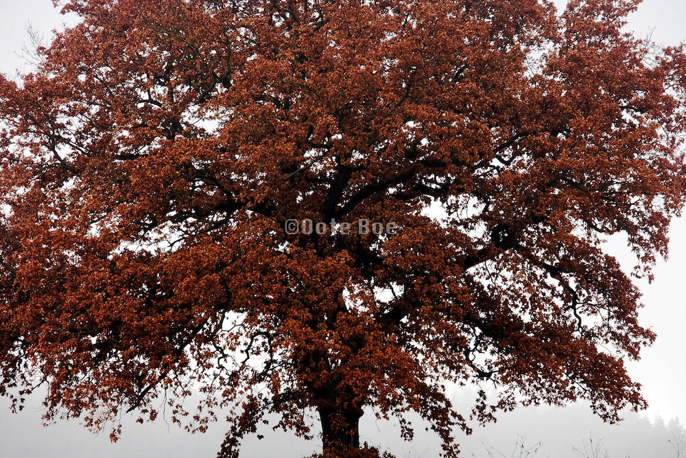 close up of the crown of a tree during fall season