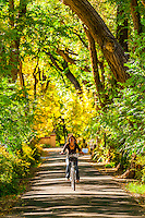 Woman bicycling down a verdant tree lined road, Los Poblanos Historic Inn & Organic Farm, Los Ranchos de Albuquerque, Albuquerque, New Mexico USA