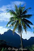 Moorea, Society Islands, <br /> French Polynesia, <br /> ( South Pacific Ocean )