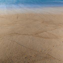 Heron tracks in the sand at South Beach on Martha's Vineyard, Massachusetts.