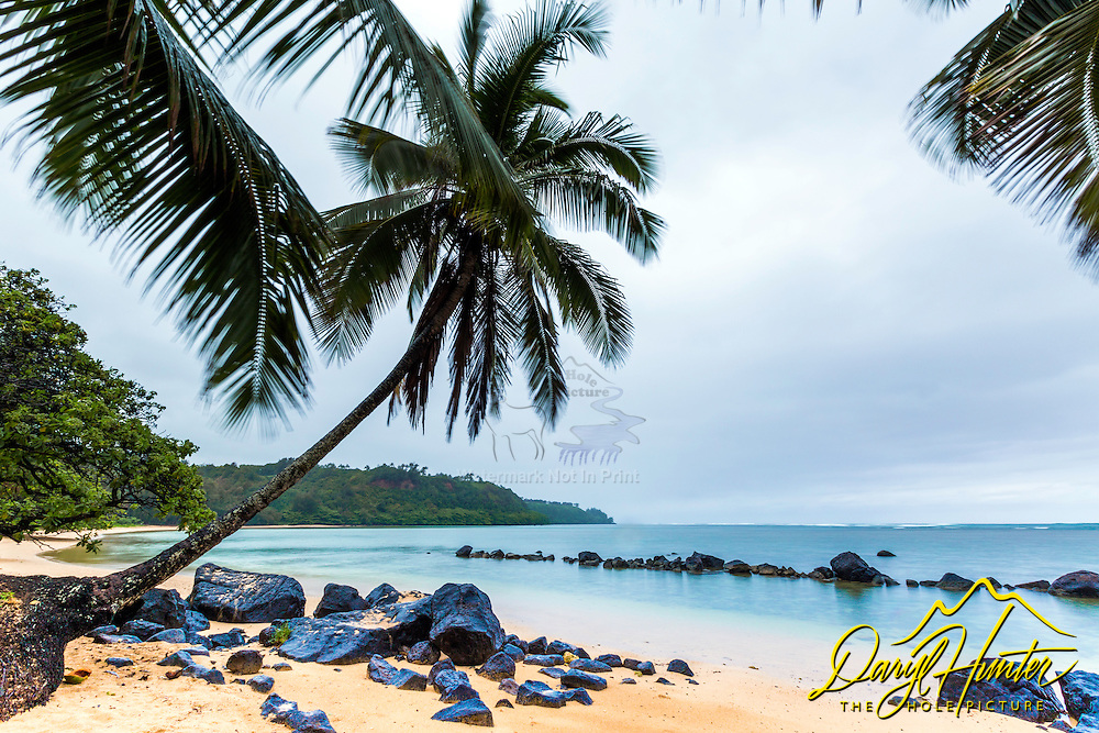 On a drizzly morning a coconut tree reminded me I was in the tropics.  This stretch of paradise is Kalihiwai Beach near Princeville Kauai in Hawaii