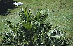 THEMENBILD - Palmenblätter in einem Park, aufgenommen am 03. Juli 2020 in Novigrad, Kroatien // Palm leaves in a park, in Novigrad, Croatia on 2020/07/03. EXPA Pictures © 2020, PhotoCredit: EXPA/ Stefanie Oberhauser