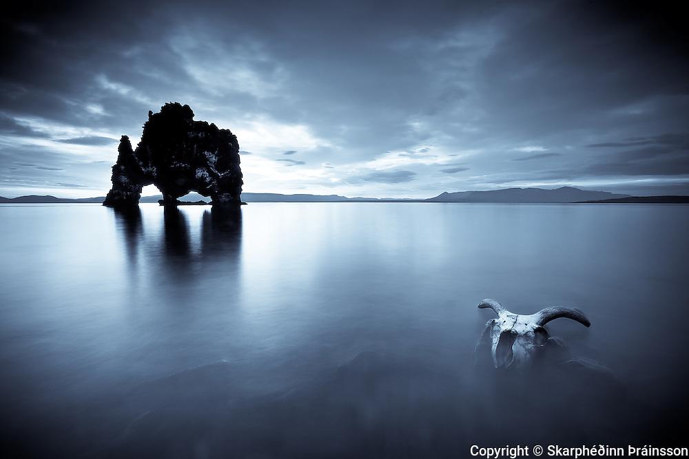 Hvítsekur in Húnaflói, and a skull of a sheep. North Iceland