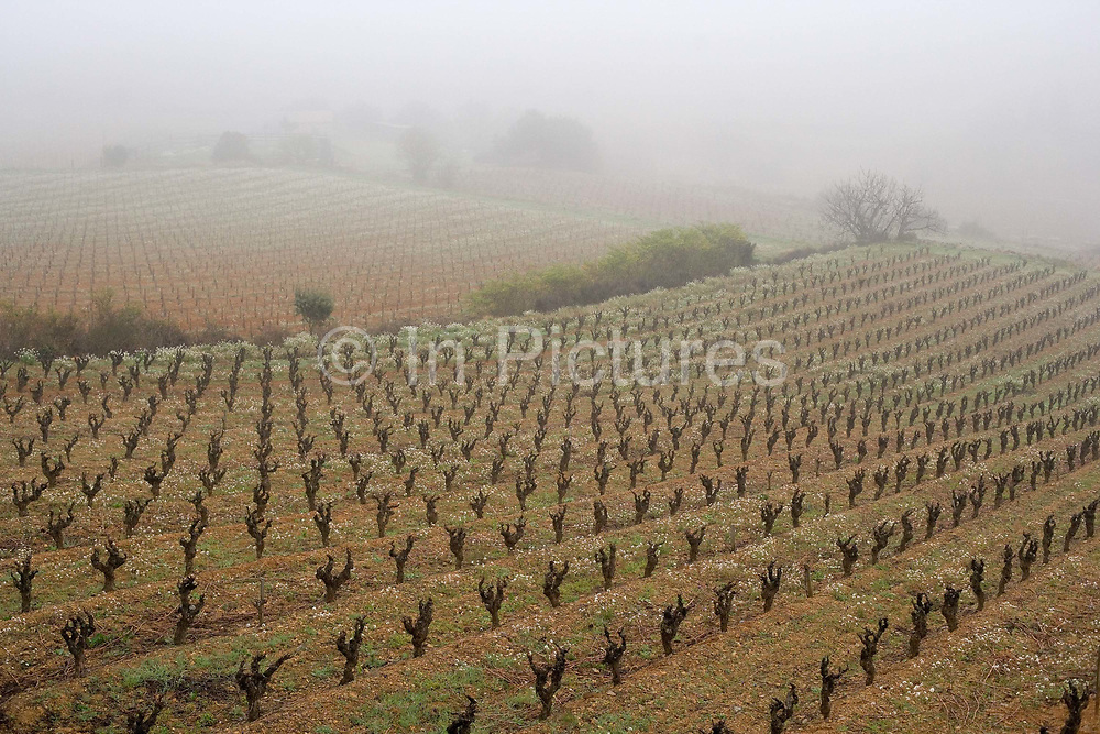Misty new vinyards in the Corbiere countryside, 6th April 2005, Lagrasse, France.