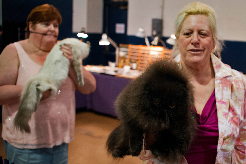photo by Matt Roth..Hidden Peak Cat Club presents their annual CFA All Breed Cat show at the Timonium Fairgrounds in Maryland Saturday, August 11, 2012.