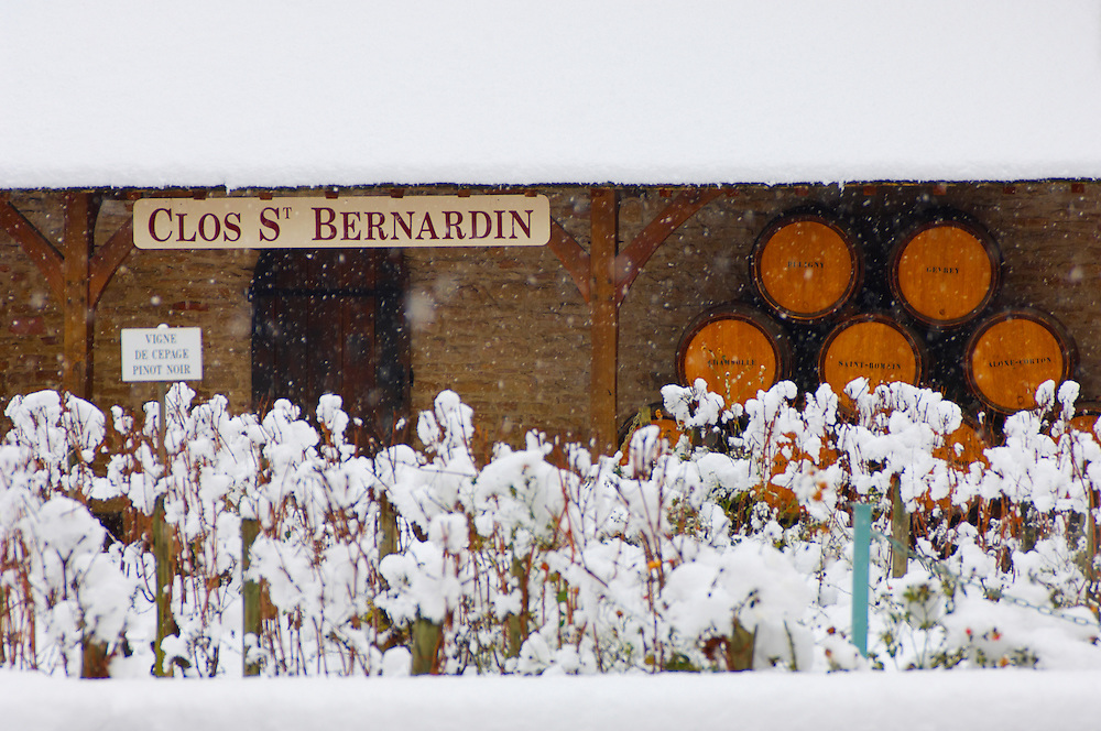 Clos Saint Bernadin - Beaune, France. Wine barrels & vines in the snow .<br /> <br /> Visit our FRANCE HISTORIC PLACES PHOTO COLLECTIONS for more photos to download or buy as wall art prints https://funkystock.photoshelter.com/gallery-collection/Pictures-Images-of-France-Photos-of-French-Historic-Landmark-Sites/C0000pDRcOaIqj8E