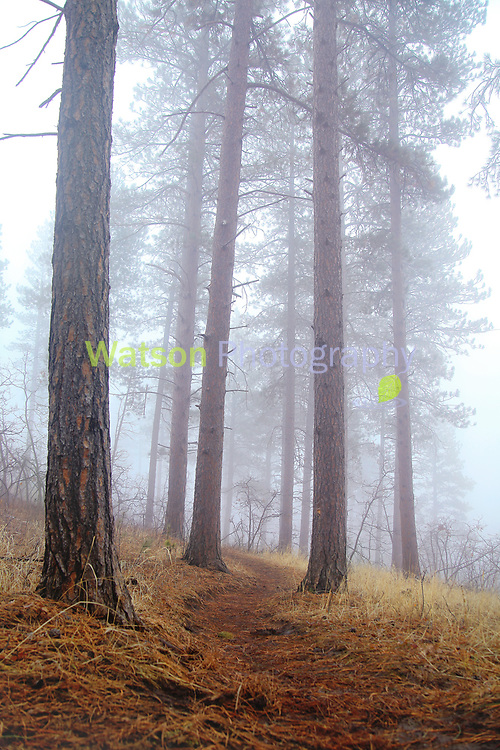 Foggy Days on the Trail