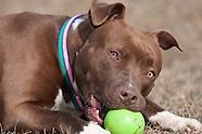 Animal Welfare Photos