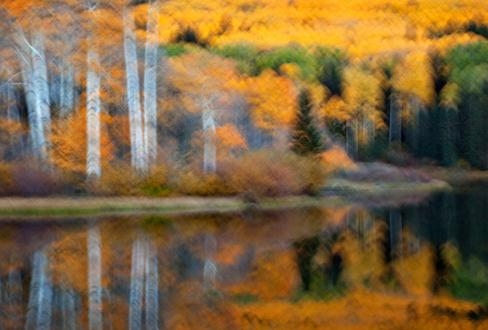 Near Telluride, Colorado. I used circular camera motion and a slow shutter speed to create an impressionistic photograph.