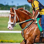 20160718 Canterbury Race Horses