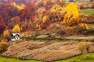 Colorful autumn forests in the mountain