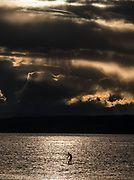 Despite the cooler temperatures, and even cooler wind, this paddle boarder set out on to Puget Sound from Golden Gardens Park. (Dean Rutz / The Seattle Times)