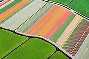 Nederland, Zuid-Holland, Gemeente Teylingen, 09-04-2014; Bloembollenvelden op geestgrond temidden van de weilanden in de Polder Elsgeest vormen een abstract bloementapijt.<br />