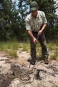 Eastern Diamondback Rattlesnake (Crotalus adamanteus) & Kevin Stohlgren<br /> CAPTIVE<br /> The Orianne Indigo Snake Preserve<br /> Telfair County. Georgia<br /> USA<br /> RANGE: Southern United States