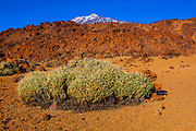Teide National Park, Parque nacional del Teide. The volcanic Mount Teide, or Pico del Teide, Tenerife, Canary Islands - at 3,718 high, it's the third highest volcano in the world after Hawaii, rising 7,500m from the ocean floor.