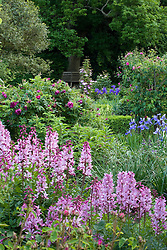 The Rose Garden at Sissinghurst Castle with Dictamnus albus var. purpureus in the foreground