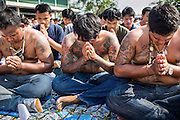 "23 MARCH 2013 - NAKHON CHAI SI, NAKHON PATHOM, THAILAND:  Men with Sak Yant tattoos pray at the closing of the Wat Bang Phra tattoo festival. Wat Bang Phra is the best known ""Sak Yant"" tattoo temple in Thailand. It's located in Nakhon Pathom province, about 40 miles from Bangkok. The tattoos are given with hollow stainless steel needles and are thought to possess magical powers of protection. The tattoos, which are given by Buddhist monks, are popular with soldiers, policeman and gangsters, people who generally live in harm's way. The tattoo must be activated to remain powerful and the annual Wai Khru Ceremony (tattoo festival) at the temple draws thousands of devotees who come to the temple to activate or renew the tattoos. People go into trance like states and then assume the personality of their tattoo, so people with tiger tattoos assume the personality of a tiger, people with monkey tattoos take on the personality of a monkey and so on. In recent years the tattoo festival has become popular with tourists who make the trip to Nakorn Pathom province to see a side of ""exotic"" Thailand. The 2013 tattoo festival was on March 23.    PHOTO BY JACK KURTZ"