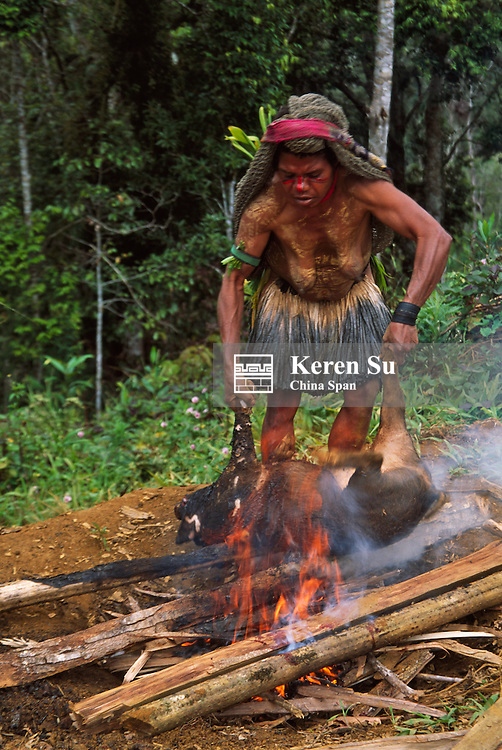 Huli woman putting pig on fire to barbecue, Tari, Southern Highlands, Papua New Guinea.