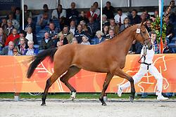 84 - Dreamer<br /> KWPN Paardendagen 2011 - Ermelo 2011<br /> © Hippo Foto - Leanjo de Koster