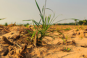 The Dry Season in Chiang Rai