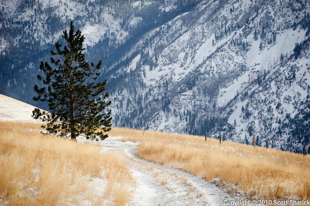 A lone pine tree on waterworks Hill in Missoula, Montana. Missoula Photographer, Montana Photographer, Pictures of Missoula, Montana Photos