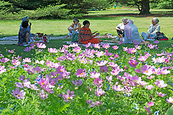 © Licensed to London News Pictures 16/06/2021. Greenwich, UK. A group have a picnic in Greenwich park gardens in London. Today could be the hottest day of the year so far with temperatures predicted to hit 30C. Photo credit:Grant Falvey/LNP