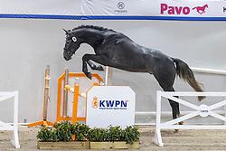 058, Nordamee<br /> KWPN Hengstenkeuring 2021<br /> © Hippo Foto - Dirk Caremans<br />  02/02/2021