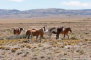 Photo documentaire Patagonie Photo Documentary /   /  / Argentina / 2008-12-18, Photo © Marc Gibert / adecom.ca