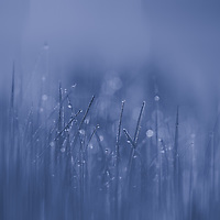 """""""Blue Streak""""<br /> <br /> Soft and subtle shades of blue in a lovely nature abstract!"""