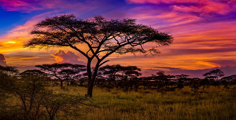 Red sunset in Serengeti