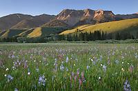 Boulder Mountains Wildflower meadows, Idaho