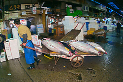 raw bluefin tunas, Thunnus sp., on cart, being transported to a wholesale store to be filleted immediately after auction, Tsukiji Fish Market or Tokyo Metropolitan Central Wholesale Market, the world's largest fish market, hadling over 2,500 tons and over 400 different kind of fresh sea food per day