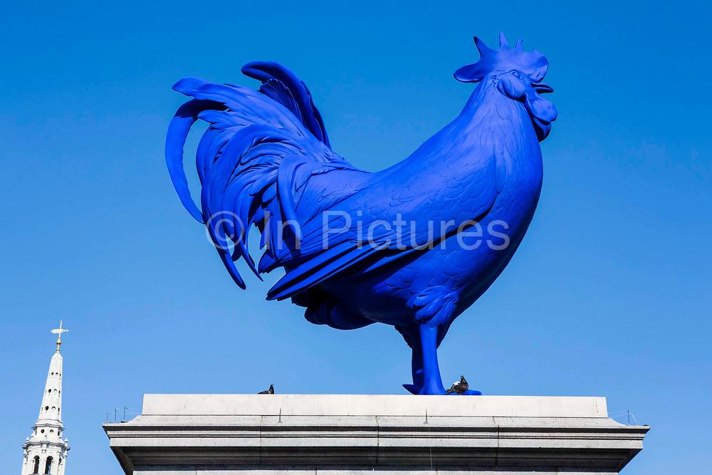 Hahn/Cock, a sculpture of a giant blue cockerel by the German artist Katharina Fritsch. Trafalgar Square, London.