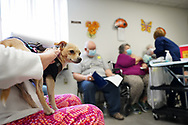 A chihuahua named Murray looks on as Lehigh Valley Health Network brought their mobile vaccination clinic to Majestic House on May 6, 2021, which offers low income housing to Seniors 55 years and over, in Tamaqua, Pennsylvania.
