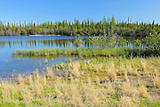 Wetland and boreal forest<br /> Near Yellowknife<br /> Northwest Territories<br /> Canada