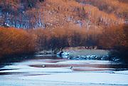 Landscape of a frozen river, Tsurui, Hokkaido, Japan