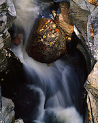 Granite boulder with autumn leaves in marble gorge of Hudson Brook, Berkshire Mountains, Natural Bridge State Park, Massachusetts.