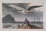 albatross colour print from the book ' A Picturesque Voyage to India by Way of China  ' by Thomas Daniell, R.A. and William Daniell, A.R.A. London : Printed for Longman, Hurst, Rees, and Orme, and William Daniell by Thomas Davison, 1810. The Daniells' original watercolors for the scenes depicted herein are now at the Yale Center for British Art, Department of Rare Books and Manuscripts,