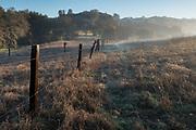 Fence in misty meadow, El Dorado County, California