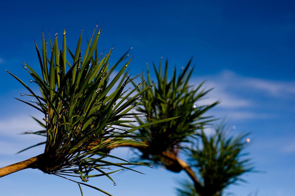 Alto Caparao_MG, Brasil...Planta do Parque Nacional do Caparao...The plant of the Caparao National Park...Foto: BRUNO MAGALHAES / NITRO